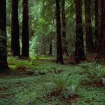 Il bosco e la foresta  hanno lame di luce soltanto nella fede in Dio