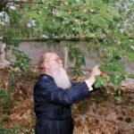 Messaggio di Sua Santità, il Patriarca Bartolomeo, per la giornata di preghiera per la protezione dell'Ambiente